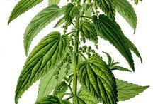 heilpflanzen  und natur Medizin
