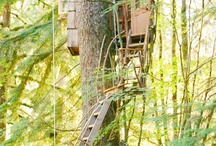 Treehouses / by Michelle Ruark
