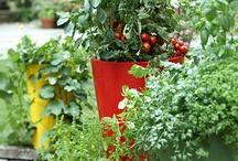 My Gardens / by Anne Jordt