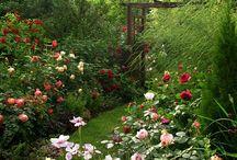 Ideas de jardin