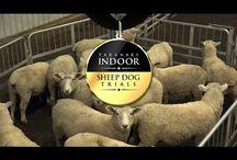 Taranaki Indoor Sheep Dog Trials
