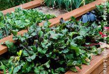 Herbalicious Veggietastic Fruitsplosian / Gardening!