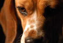 Flynn's dogs / Dogs