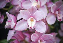 Flores  -orquideas / by A . Calderon