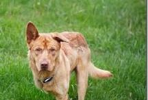 Animals Needing Furever Homes / by JoAnn Stancer
