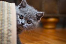 Pets / by Alisha Khan