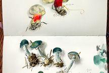 Nature sketchbooks     Carnets de nature / Because drawing is understanding.