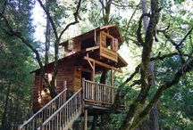 Going to live in a tree house one day