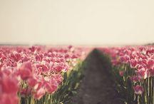 |Bloom|