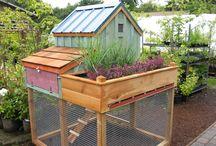 urban-utopian-wanna-be-gardeners and chiken coop people