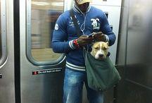 Puppy Love...... / by Brook Niki-Workman