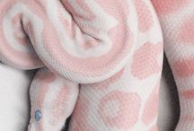Animals / Snake #snake #pink #eyes #blue
