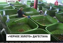 рыборазведение