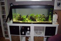 Aquarium/ Aquaristik