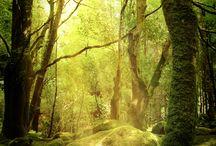 Natur Bilder