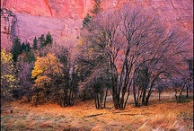 Utah (Beehive State) / Utah is a state in the Western United States. Utah is bordered by Colorado on the east, Wyoming on the northeast, Idaho on the north, Arizona on the south, and Nevada on the west. It also touches a corner of New Mexico. / by Jeannine Mantooth