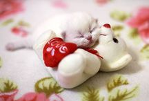 Lovely Dogs & Cats 2 ❤️❤️❤️