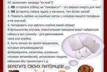 Веганство, защита животных