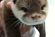 Cute lil' critters!