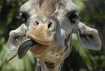 Grappige dieren foto's