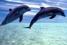 Dolphins  / One of the most beautiful and amazing animals in the world!