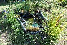 bassin de jardin et plantes aquatiques