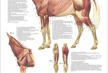 animal anathomy