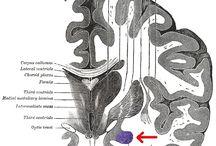 neurology development