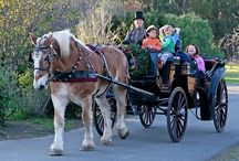 Holiday Carriages / Start your holiday horse carriage ride tradition this year! Book early- December is our busiest month.