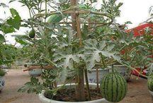 plantas y cultivos