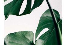 botanisch Regioleren