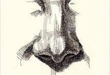 Pen & Ink Illustrations