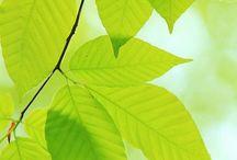 Close ups (plants)
