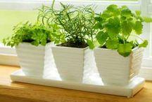 plantjes (: