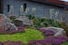 Low water garden design
