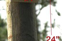 flaggermus