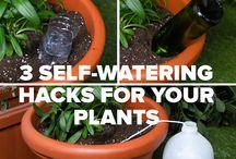 Self watering