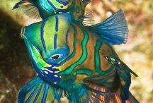 Under water world / Fishes