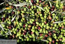 ENJOY OUR OLIVE OIL / Quinta do Crasto includes a considerable area of olive groves and has been producing extra virgin olive here for many years.