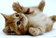 chatons / mignon