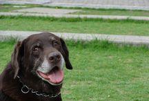 My dogs / Mis queridos perros