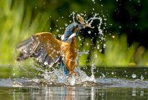 Wildlife Photography Workshops UK / Wildlife Photography Workshops run by Ron McCombe