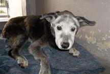 DEATH ROW, emergency ! Urgent adoption needed ! / High kill shelters !