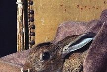 Beautiful Bunnies / Lovely pictures of lagomorphs.