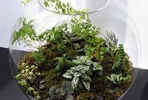 E&J plantes interieures
