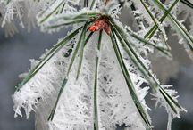 képek tél