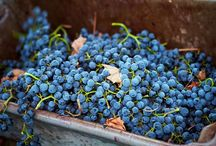 Russian River Valley wineries / by Chris Messina