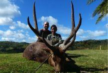 Ile Maurice / Des vacances bien entendu mais ... des vacances de chasse. Cerf de java, cochon marron, petit gibier ... et la pêche entre deux séances de chasse :-)