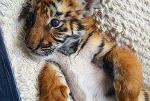 Cutie Animals