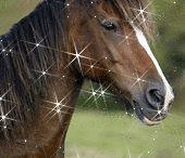Animacje zwierzęta - konie